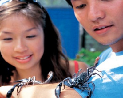 StreetDeal Fun & Entertainment Deal: Butterfly Park & Insect Kingdom Ticket with Bird Feeding