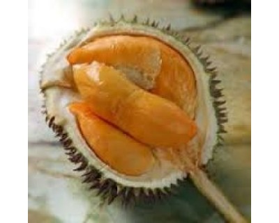 Eat-all-you-can Durian in Penang