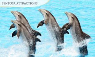 UP TO 37% off Underwater World & Dolphin Lagoon Show + Luge & Skyride + Songs of the Sea (ADULT / CHILD)