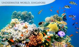 UP TO 50% off Underwater World & Dolphin Lagoon Show + Captain Explorer DUKW Tour + SGD5 Food Trail Voucher @ Singapore Flyer (ADULT / CHILD)